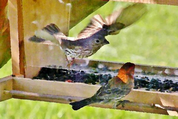 Photograph - At The Birdfeeder by Kim Bemis