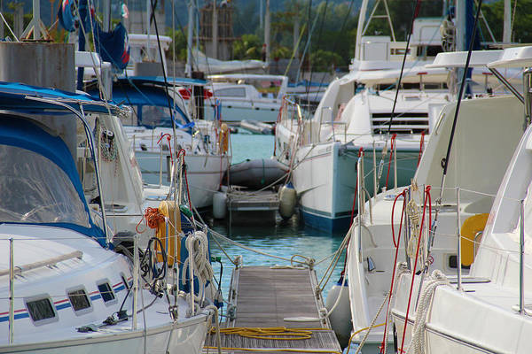 Photograph - At The Dock by Debbie Cundy