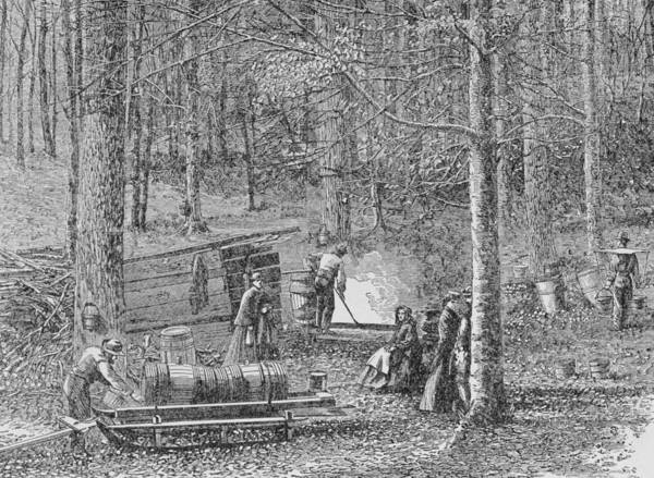 Woodland Drawing - At The Maple Syrup Camp by American School
