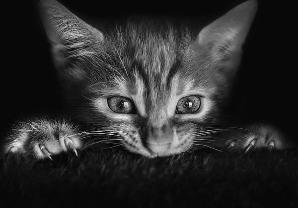 Kitten Wall Art - Photograph - At The Movies by Monte Pi (10catsplus)