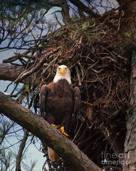 Photograph - At The Old Nest by Jai Johnson