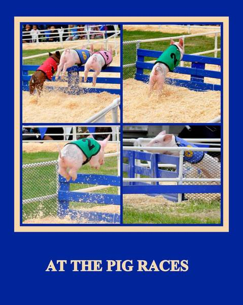 Photograph - At The Pig Races by AJ  Schibig