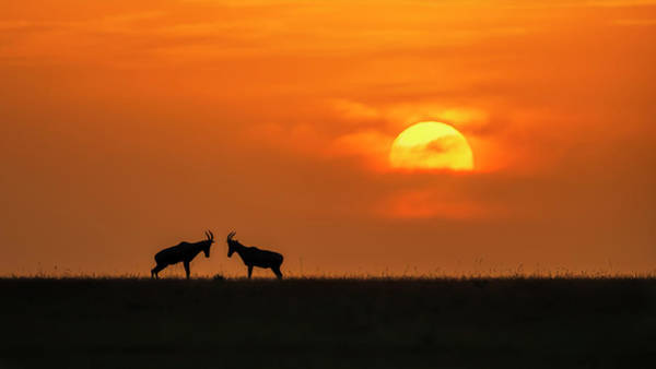 Pair Photograph - At The Sunset by Jun Zuo