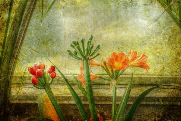 Clivia Wall Art - Photograph - At The Window by Mother Nature