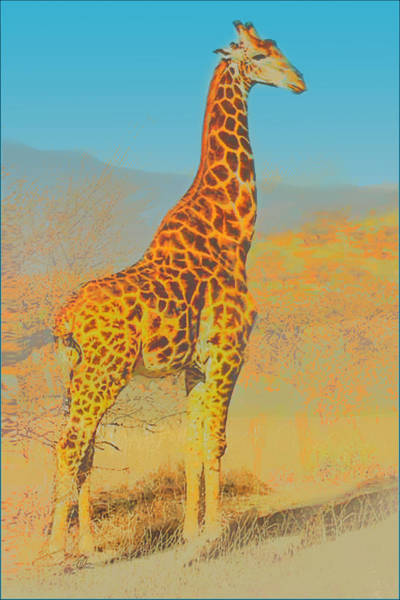 Painting - At The Zoo - Giraffe by Douglas MooreZart