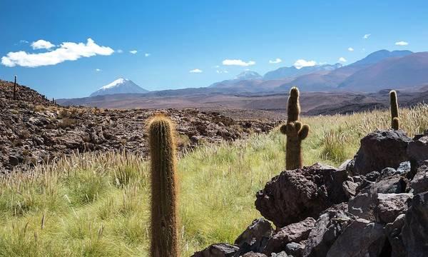 Cactaceae Photograph - Atacama Landscape With Cactus by Peter J. Raymond