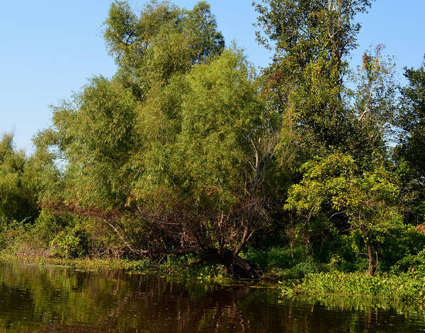 Photograph - Atchafalaya Basin 12 by Maggy Marsh