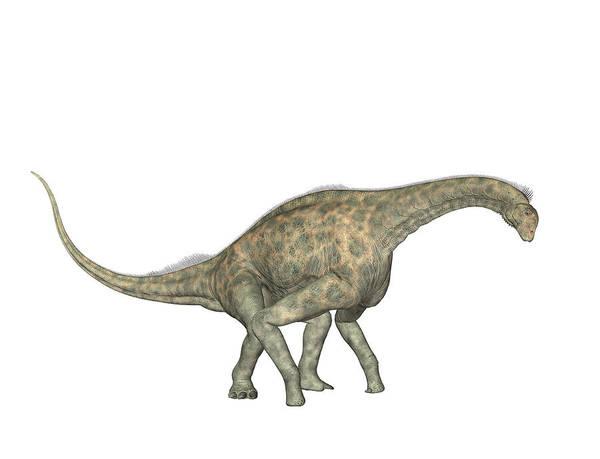 Paleozoology Wall Art - Photograph - Atlasaurus Dinosaur by Friedrich Saurer