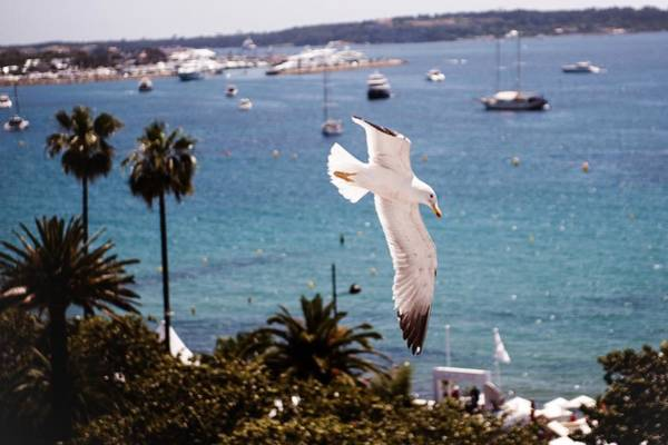 Cannes Photograph - Atmosphere - The 67th Annual Cannes by Francois Durand