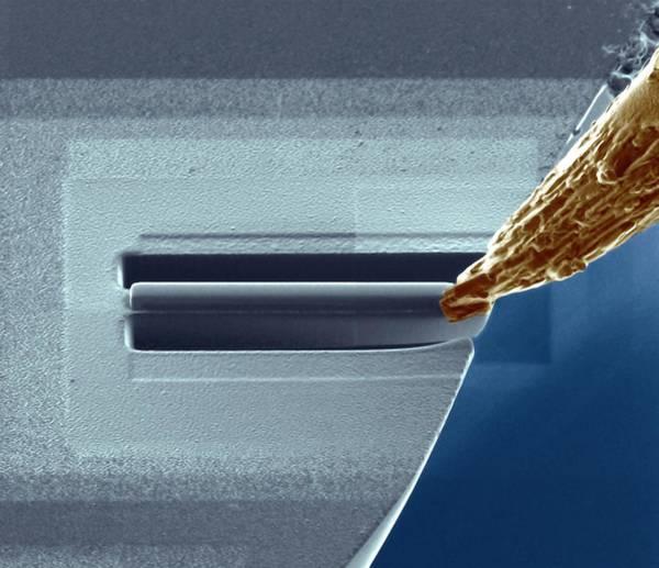 Platinum Photograph - Atom Probe Analysis by Ammrf, University Of Sydney