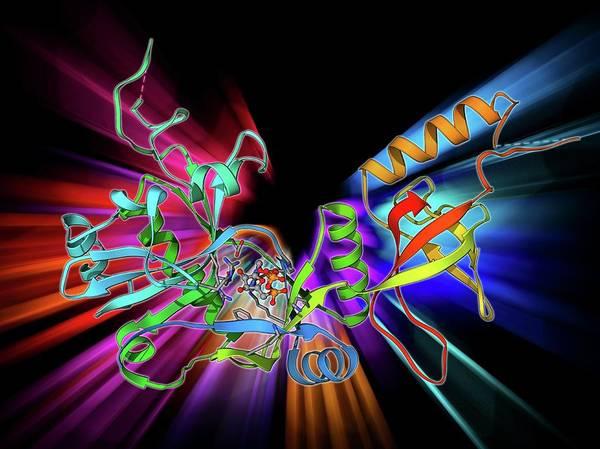 Adenosine Triphosphate Wall Art - Photograph - Atp-dependent Dna Ligase Molecule by Laguna Design