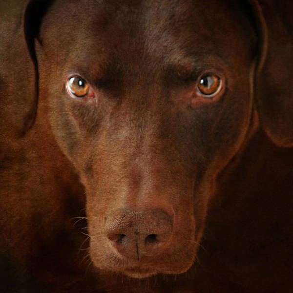 Breed Of Dog Photograph - Attila by Heike Hultsch