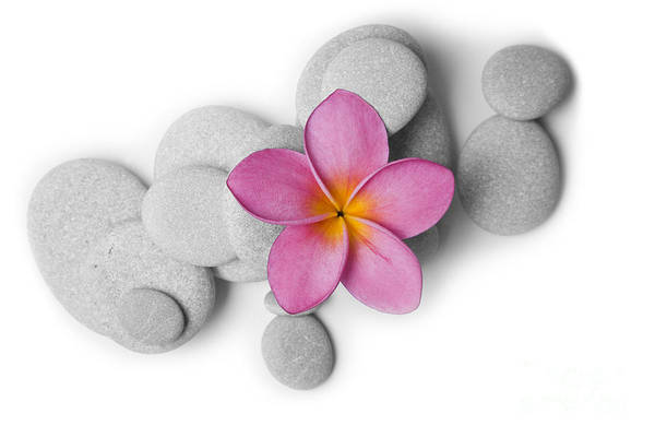 Soul Photograph - Attractive Pebbles And Flower by Alex Bramwell
