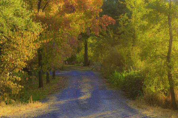 Photograph - Auburn Autumn by Sherri Meyer