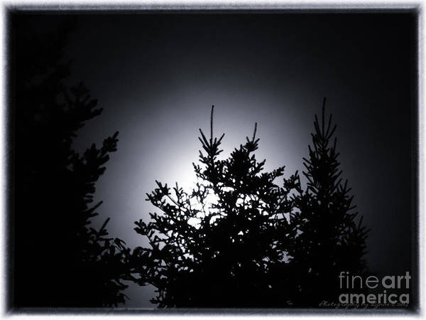 Photograph - August 2014 Super Moon by Gena Weiser