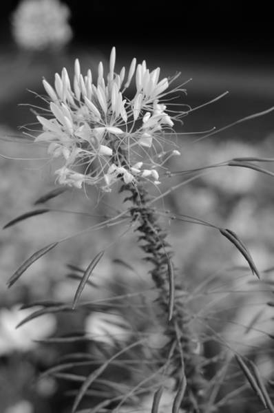 Photograph - August Garden by Miguel Winterpacht