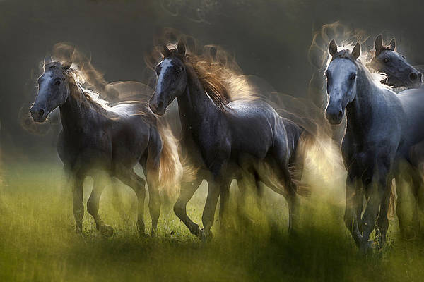 Herd Photograph - Aura by Milan Malovrh