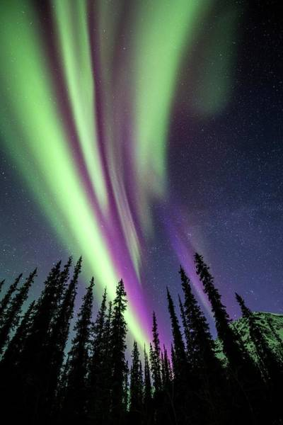 Atoms Wall Art - Photograph - Aurora Borealis Over Trees by Chris Madeley