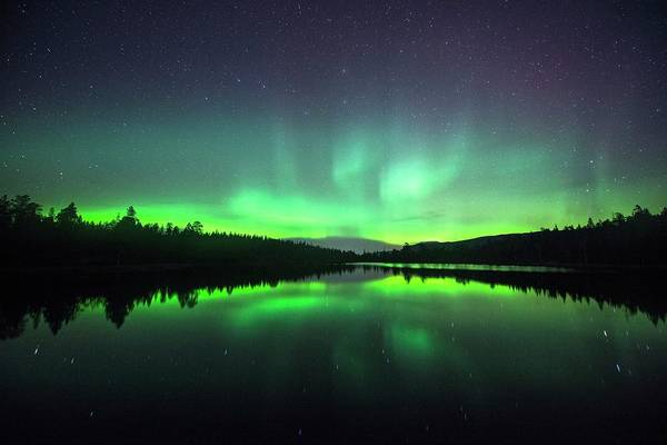 Wall Art - Photograph - Aurora Borealis Over Trees by Tommy Eliassen/science Photo Library