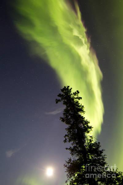 Photograph - Aurora Borealis With Tree And Full by Joseph Bradley