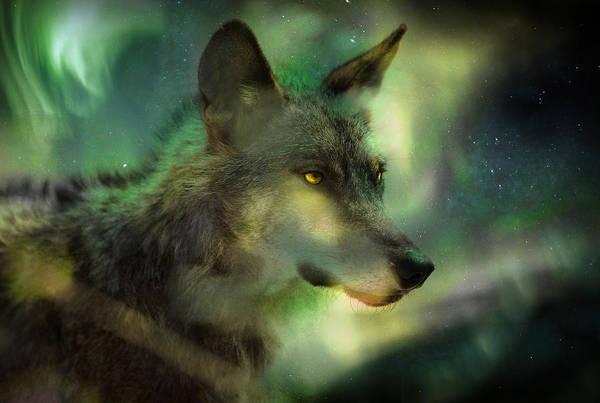 Wall Art - Photograph - Aurora Wolf by Mal Bray