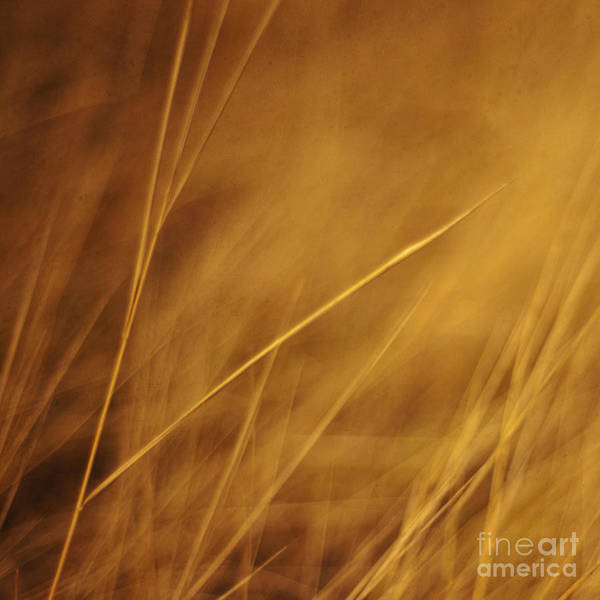 Golden Photograph - Aurum by Priska Wettstein