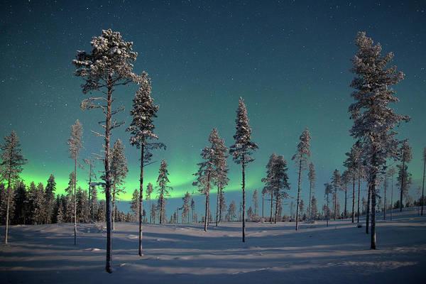 Pine Tree Photograph - Aururora Over Frozen Pine Trees by Antonyspencer