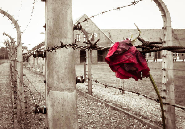Concentration Camp Photograph - Auschwitz by Ian Hufton