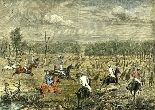 New South Wales Drawing - Australia Kangaroo Hunt 1880 by Australian School