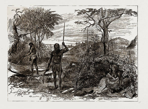 New South Wales Drawing - Australian And New Zealand Exhibits At The Colonial by Litz Collection