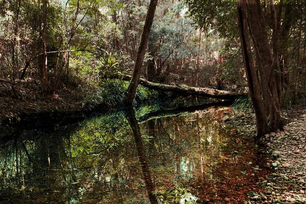 Photograph - Australian Forest Stream by David Rich