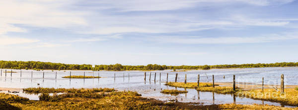 Qld Photograph - Australian Mangrove Landscape Panorama by Jorgo Photography - Wall Art Gallery