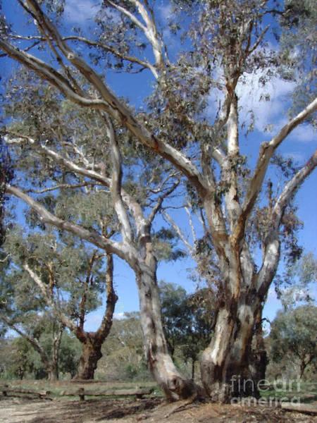 Digital Art - Australian Native Tree 12 by Russell Kightley