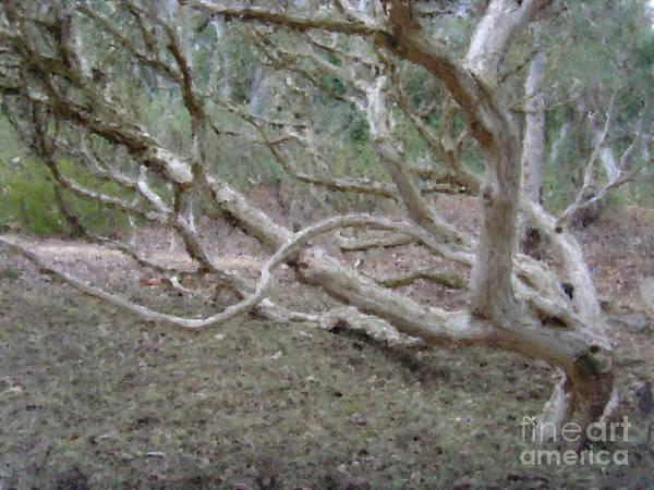 Digital Art - Australian Native Tree 4 by Russell Kightley