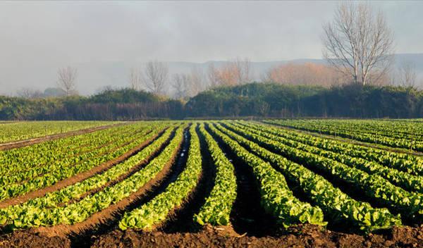 Photograph - Australian Soil Lettuce Rejoice by Nicholas Blackwell