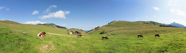 Wall Art - Photograph - Austria, View Of Cow Grazing On Alp by Westend61
