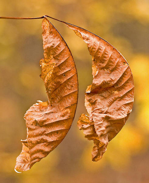 Photograph - Autum Leaves by Frank Winters