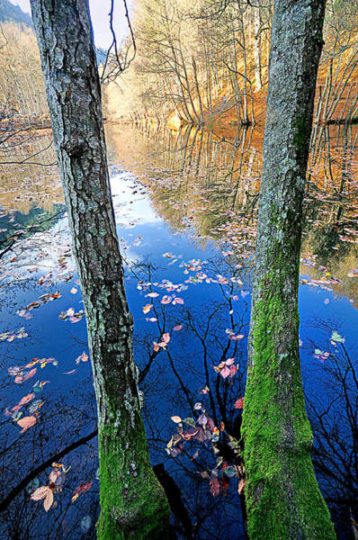 Photograph - Autumn - 7 by Okan YILMAZ