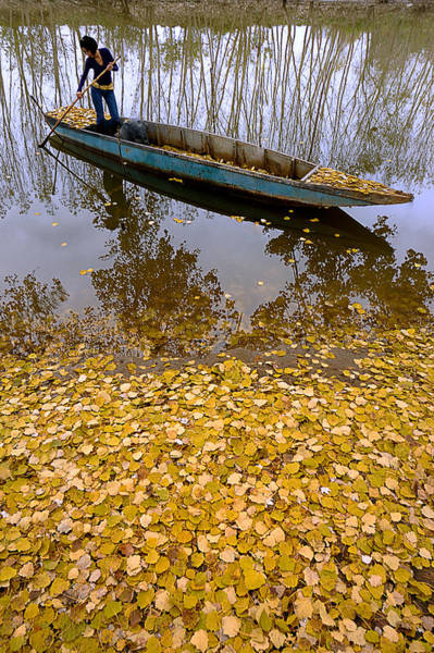 Photograph - Autumn - 9 by Okan YILMAZ