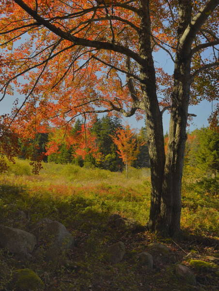 Wall Art - Photograph - Autumn Afternoon by Stephen  Vecchiotti