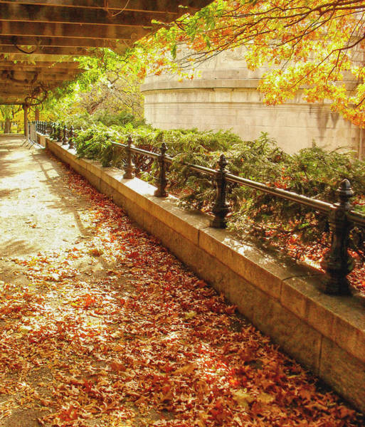 Wall Art - Photograph - Autumn Afternoon by Vivienne Gucwa