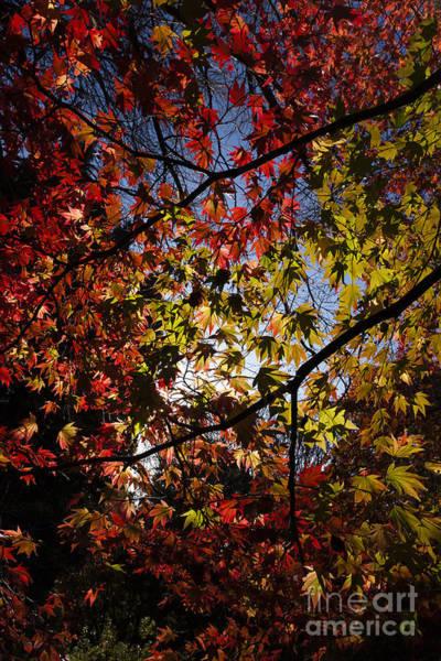 Photograph - Autumn by Andy Myatt