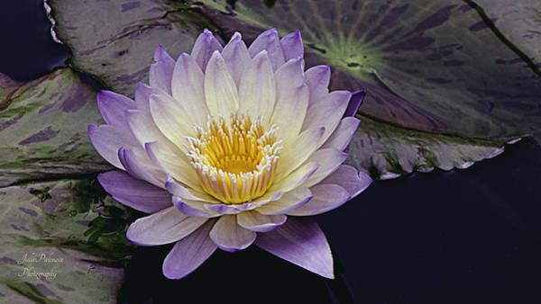 Photograph - Autumn Aquatic Bloom by Julie Palencia