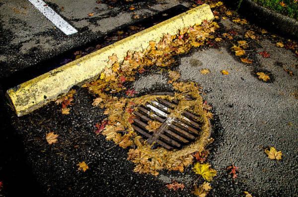 Photograph - Autumn Asphalt by Roxy Hurtubise