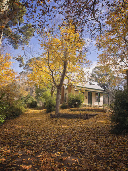 Photograph - Autumn At Daylesford by Kim Andelkovic
