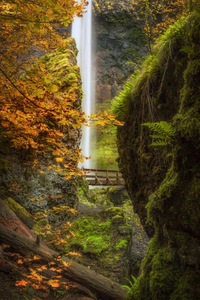 Photograph - Autumn At Elowah by Jon Ares