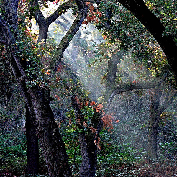 Digital Art - Autumn At First Light by Joseph Coulombe