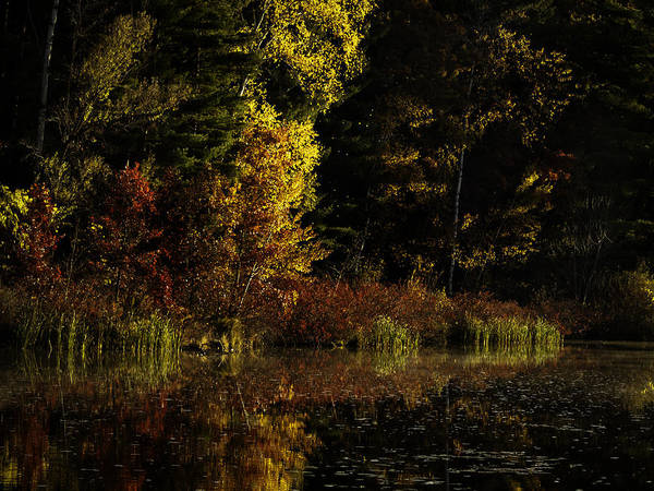 Wall Art - Photograph - Autumn At It's Finest by Thomas Young