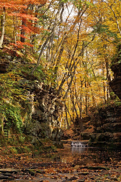 Photograph - Autumn At Pewitt's Nest by Theo OConnor
