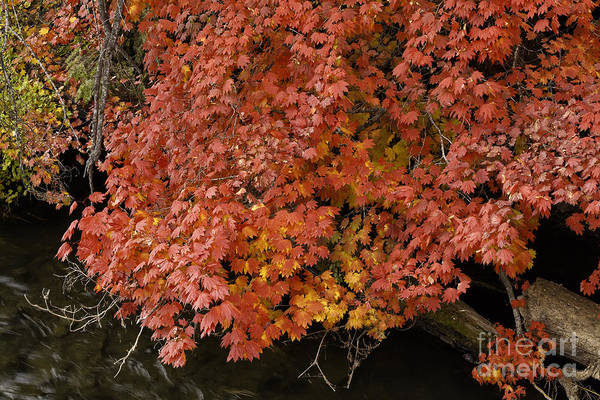 Autumn At Suttle Lake Art Print